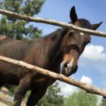 Мы получили корм для наших лошадок в гранулах