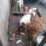 Продолжение истории о  #собаки_заложники