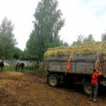 Закупили 100 тюков сена для лошадей и козла Бори.